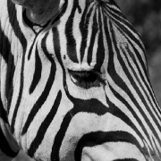 2011 Tanzanian Safari